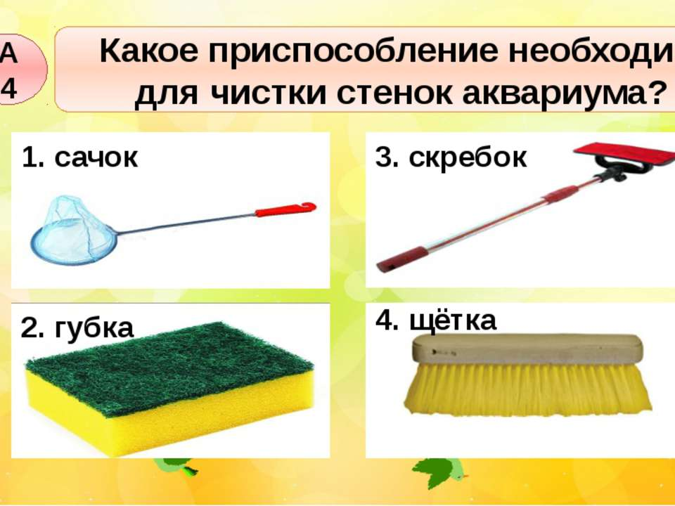 Какое приспособление необходимо для чистки стенок аквариума? А4 1. сачок 2. г...