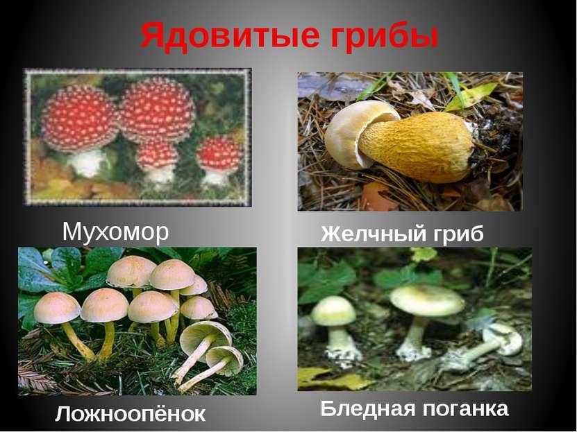 Кроме полезных растений в природе можно встретить ядовитые. Багульник болотны...