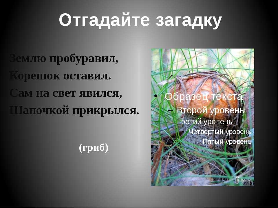 Ядовитые грибы Мухомор Желчный гриб Ложноопёнок Бледная поганка