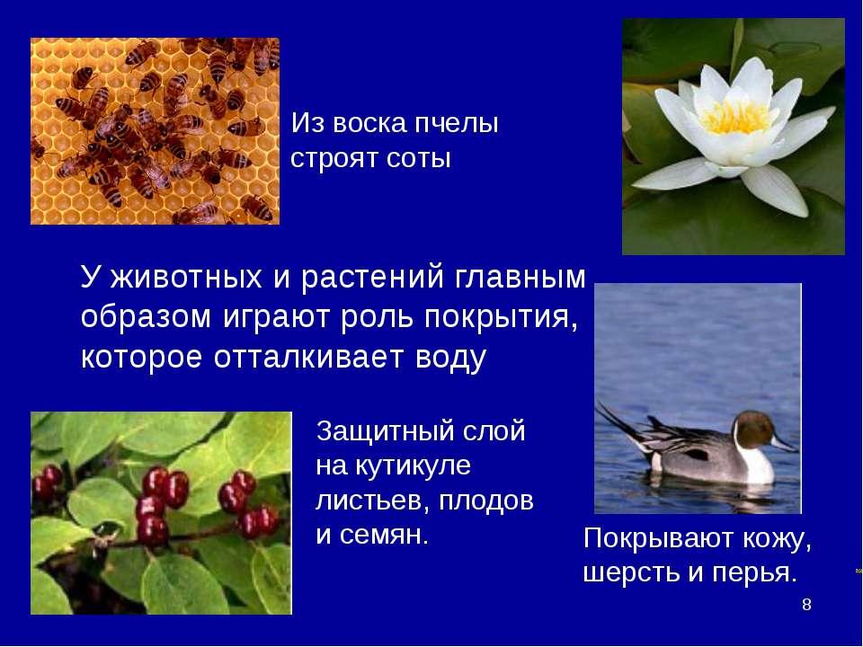 * Воски У животных и растений главным образом играют роль покрытия, которое о...