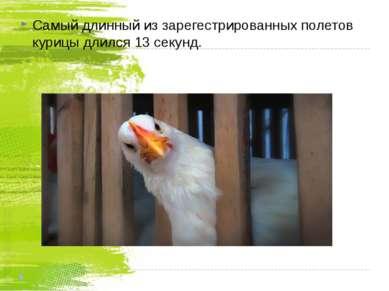 Самый длинный из зарегестрированных полетов курицы длился 13 секунд.