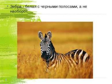 Зебра - белая с черными полосами, а не наоборот.