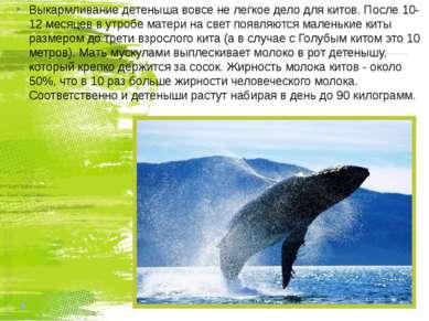 Выкармливание детеныша вовсе не легкое дело для китов. После 10-12 месяцев в ...