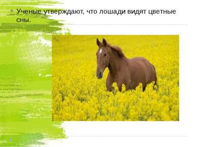 Ученые утверждают, что лошади видят цветные сны. Ученые утверждают, что лошад...