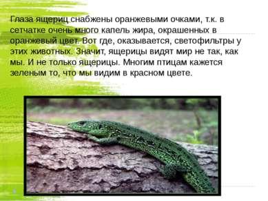 Глаза ящериц снабжены оранжевыми очками, т.к. в сетчатке очень много капель ж...