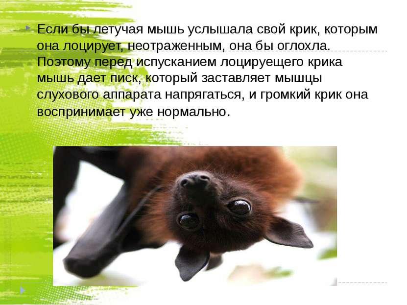 Если бы летучая мышь услышала свой крик, которым она лоцирует, неотраженным, ...