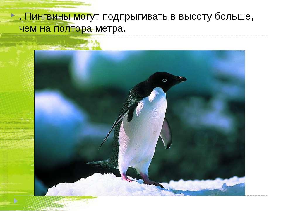 . Пингвины могут подпрыгивать в высоту больше, чем на полтора метра.