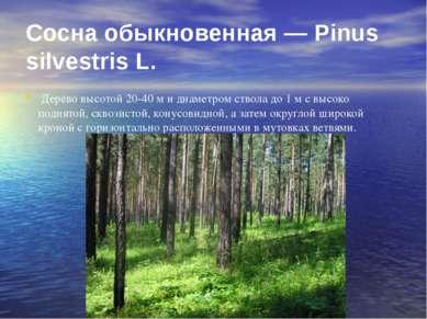 Сосна обыкновенная — Pinus silvestris L. Дерево высотой 20-40 м и диаметром с...
