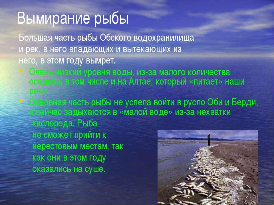 Вымирание рыбы Большая часть рыбы Обского водохранилища и рек, в него впадающ...