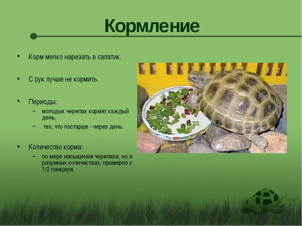 Кормление Корм мелко нарезать в салатик. С рук лучше не кормить. Периоды: мол...