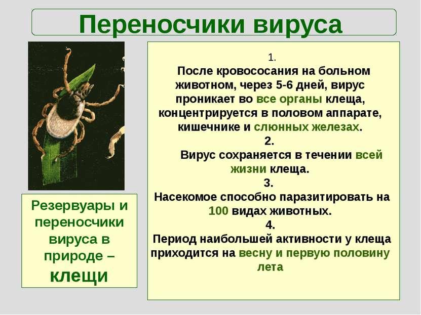 Переносчики вируса Резервуары и переносчики вируса в природе –клещи 1. После ...