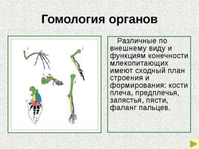 Гомология органов Гомология слуховых косточек позвоночных 1–череп костной р...