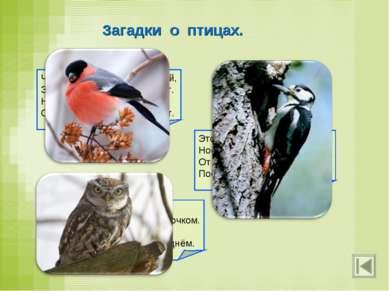 Загадки о птицах. Чернокрылый, красногрудый, Здесь зимой найдёт приют. Не бои...