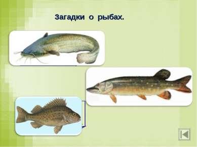 Загадки о рыбах. Он в самом омуте живёт, Хозяин глубины. Имеет он огромный ро...