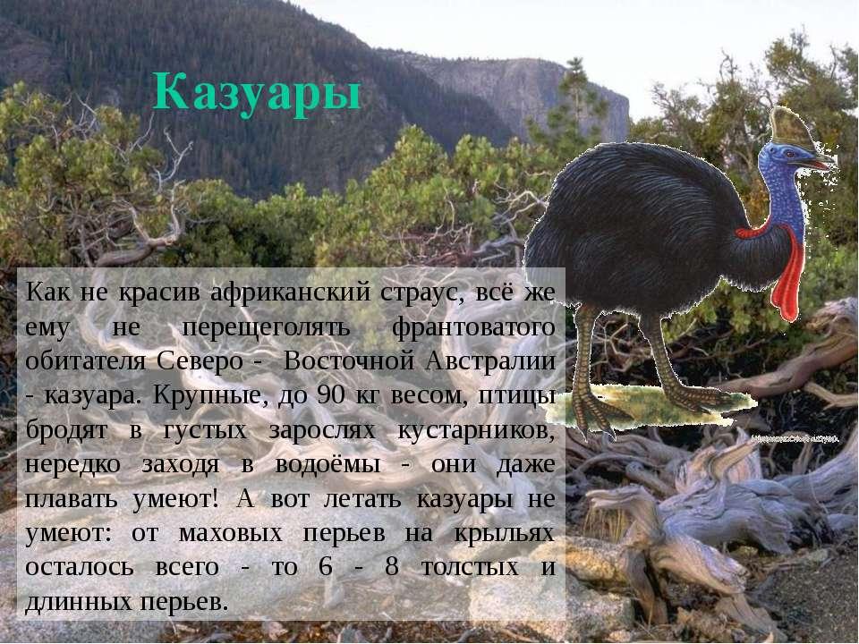 Казуары Как не красив африканский страус, всё же ему не перещеголять франтова...
