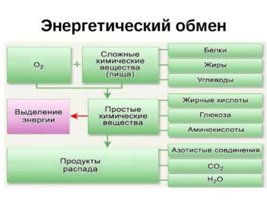 Энергетический обмен