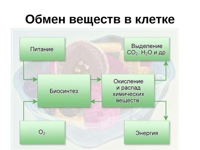 Обмен веществ в клетке