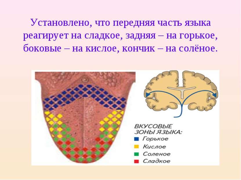 Установлено, что передняя часть языка реагирует на сладкое, задняя – на горьк...