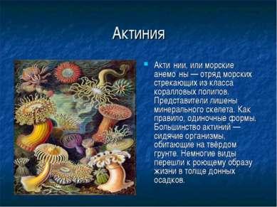 Актиния Акти нии, или морские анемо ны — отряд морских стрекающих из класса к...