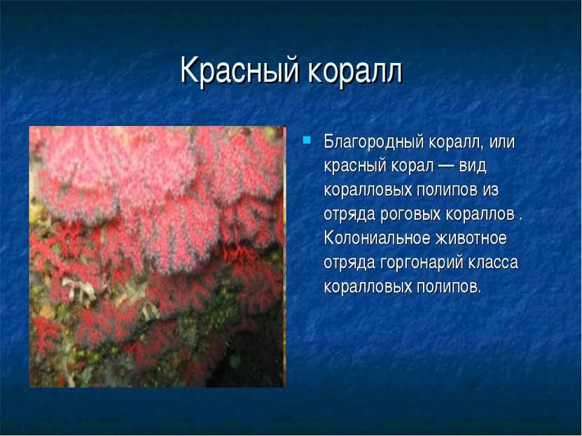 Красный коралл Благородный коралл, или красный корал — вид коралловых полипов...