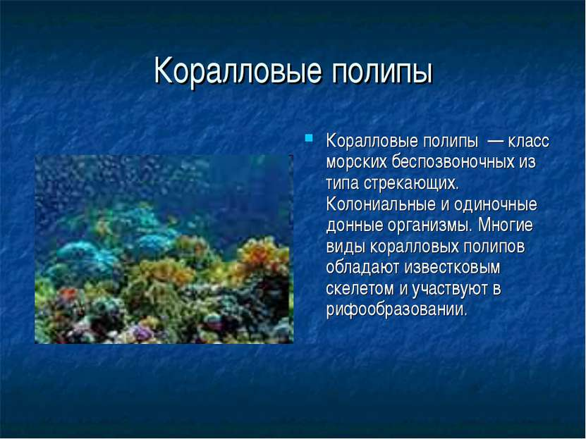 Коралловые полипы Коралловые полипы — класс морских беспозвоночных из типа ст...
