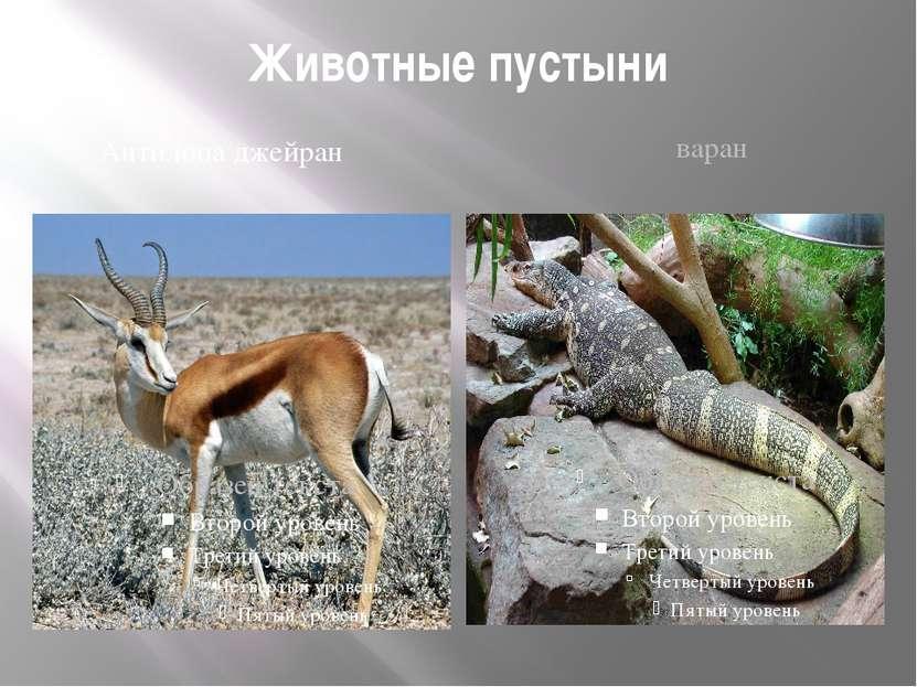 Животные пустыни Антилопа джейран варан