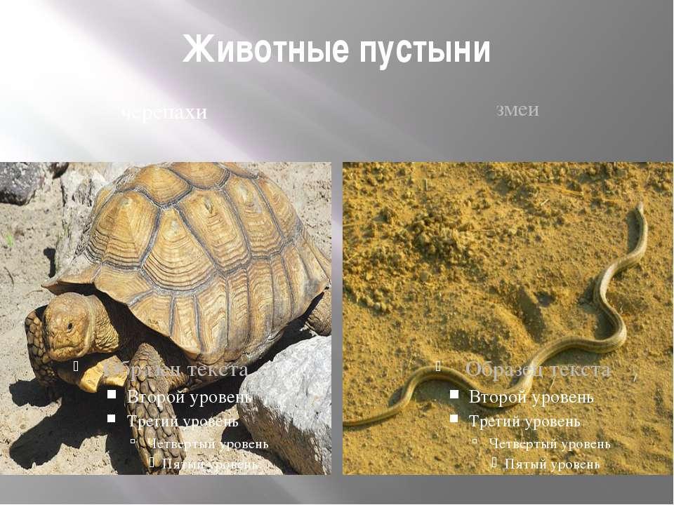 Животные пустыни черепахи змеи