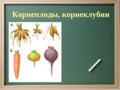 Корнеплоды, корнеклубни