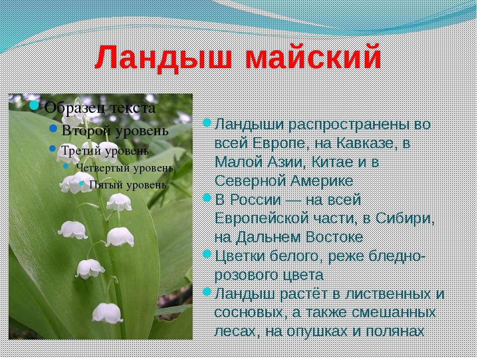 Ландыш майский Ландыши распространены во всей Европе, на Кавказе, в Малой Ази...