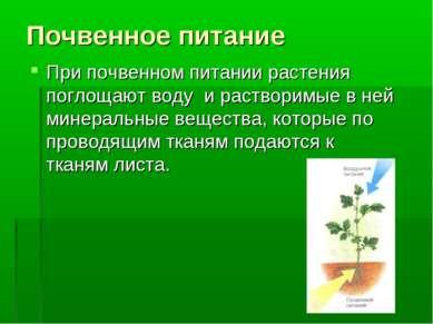Почвенное питание При почвенном питании растения поглощают воду и растворимые...