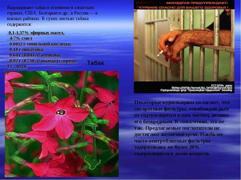 Выращивают табак в основном в азиатских странах, США, Болгарии и др.; в Росси...