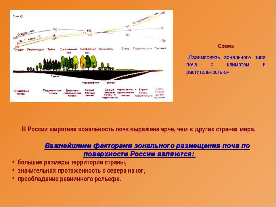 В России широтная зональность почв выражена ярче, чем в других странах мира. ...