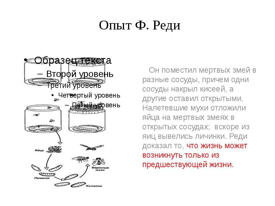 Опыт Ф. Реди Он поместил мертвых змей в разные сосуды, причем одни сосуды нак...