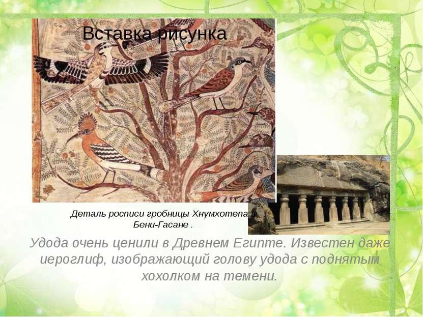 Деталь росписи гробницы Хнумхотепа в Бени-Гасане . Удода очень ценили вДревн...