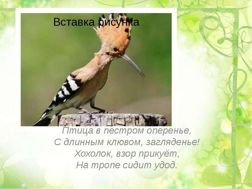 Птица в пестром оперенье, С длинным клювом, загляденье! Хохолок, взор прикуёт...