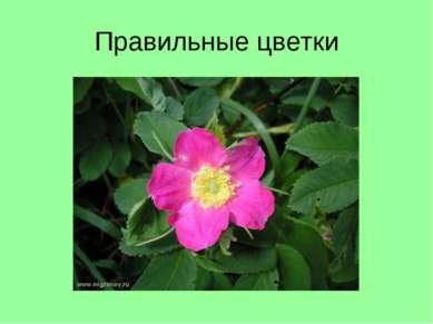 Правильные цветки