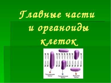 Главные части и органоиды клеток