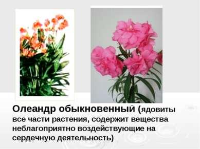 Олеандр обыкновенный (ядовиты все части растения, содержит вещества неблагопр...