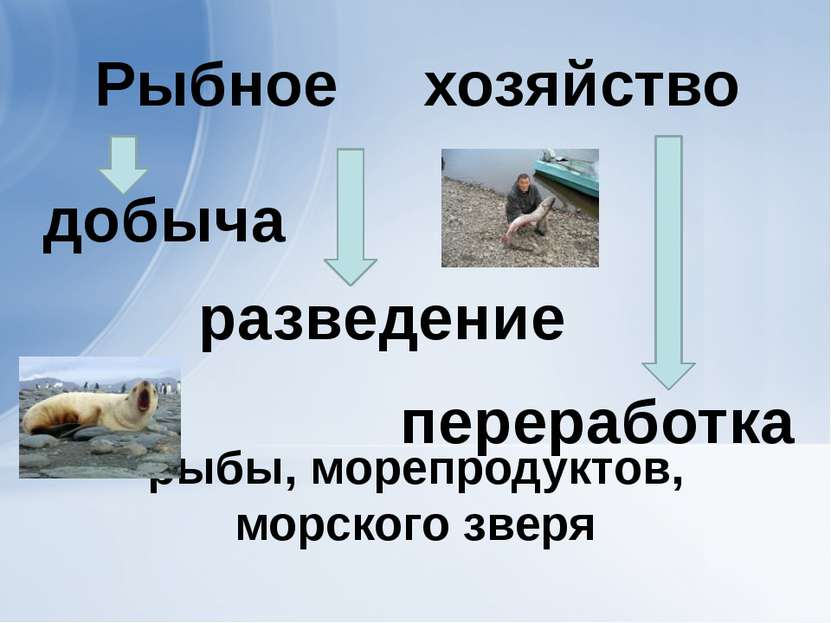 рыбы, морепродуктов, морского зверя добыча разведение переработка хозяйство Р...