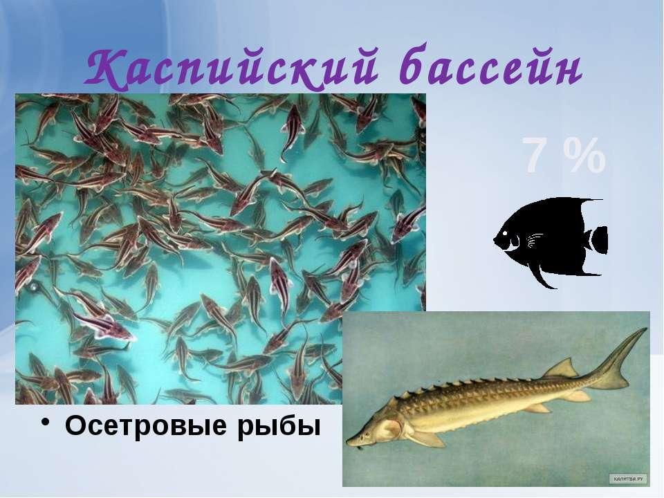 Каспийский бассейн Осетровые рыбы 7 %