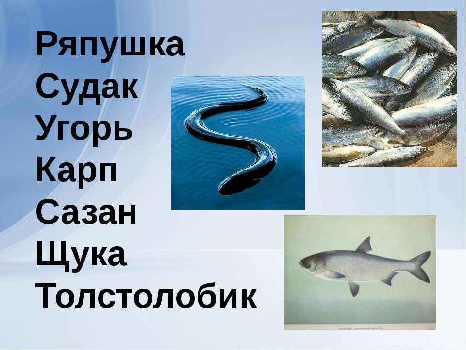 Ряпушка Судак Угорь Карп Сазан Щука Толстолобик
