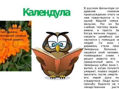 Календула В русском фольклоре сохранилось древнее сказание о происхождении эт...