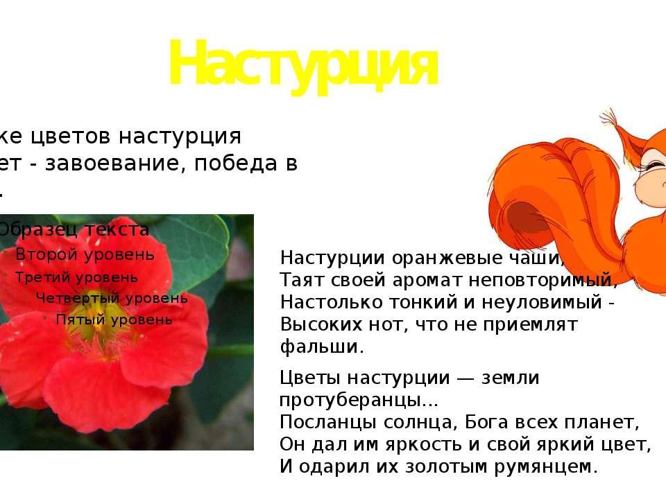Настурция На языке цветов настурция означает - завоевание, победа в борьбе. Н...