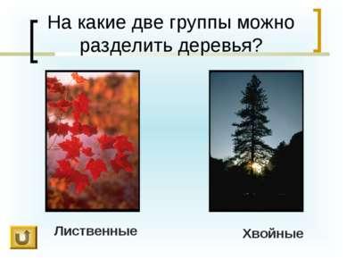 На какие две группы можно разделить деревья? Лиственные Хвойные