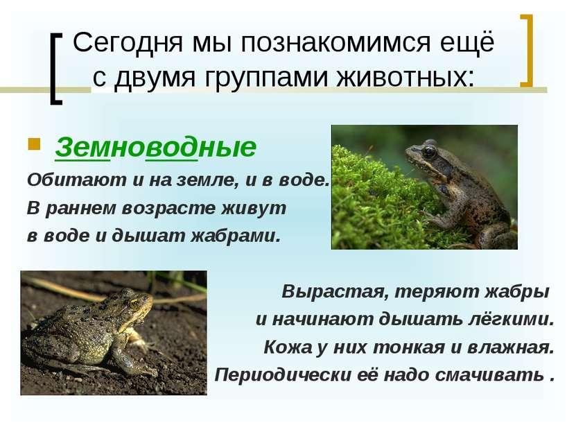 Сегодня мы познакомимся ещё с двумя группами животных: Земноводные Обитают и ...