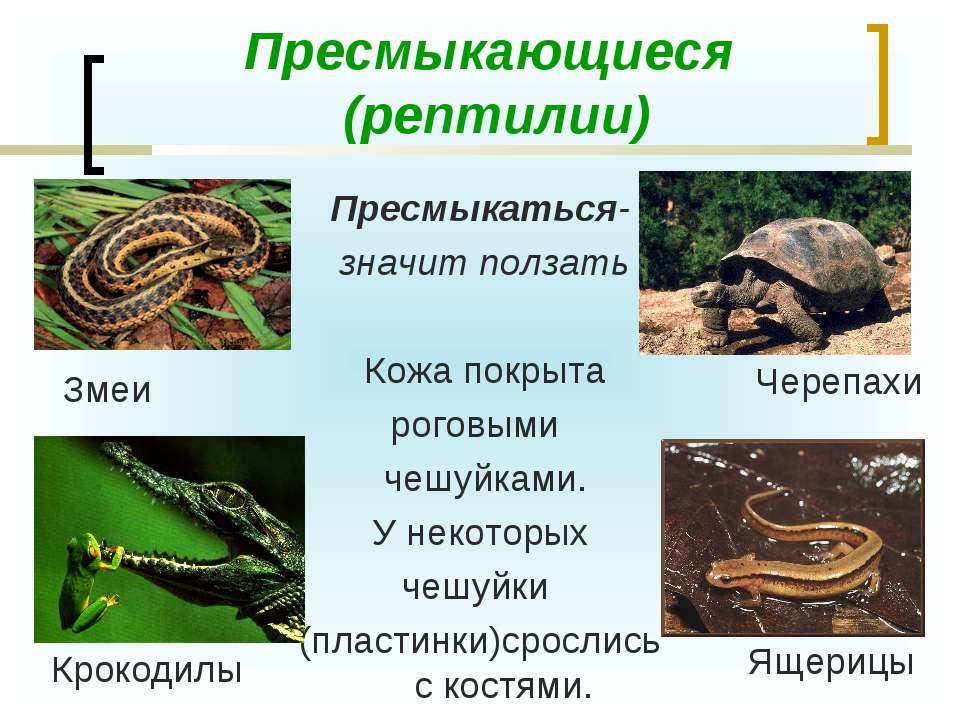 Пресмыкающиеся (рептилии) Пресмыкаться- значит ползать Кожа покрыта роговыми ...