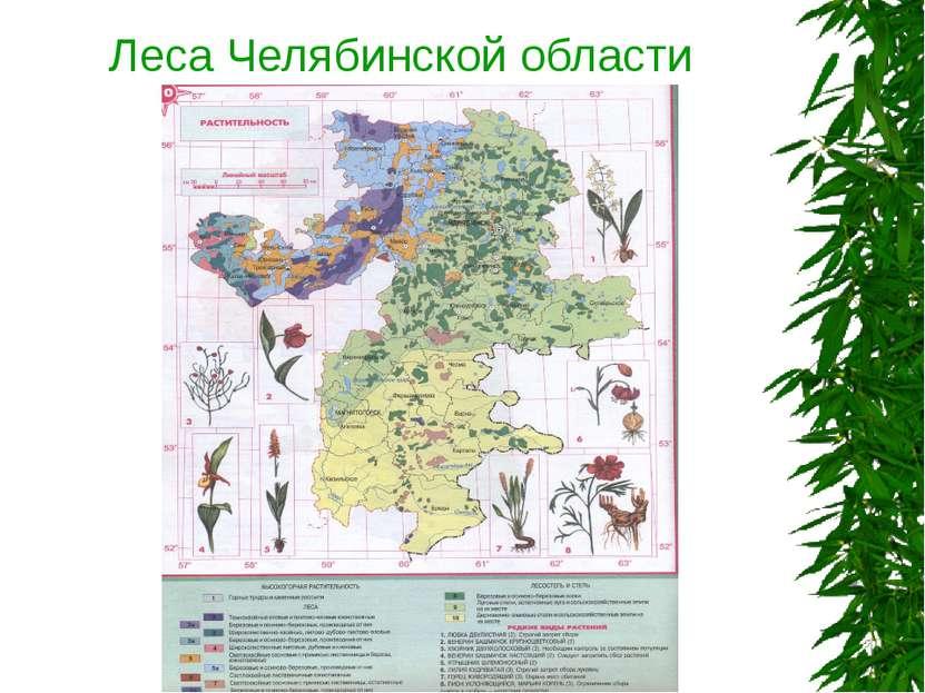 Леса Челябинской области