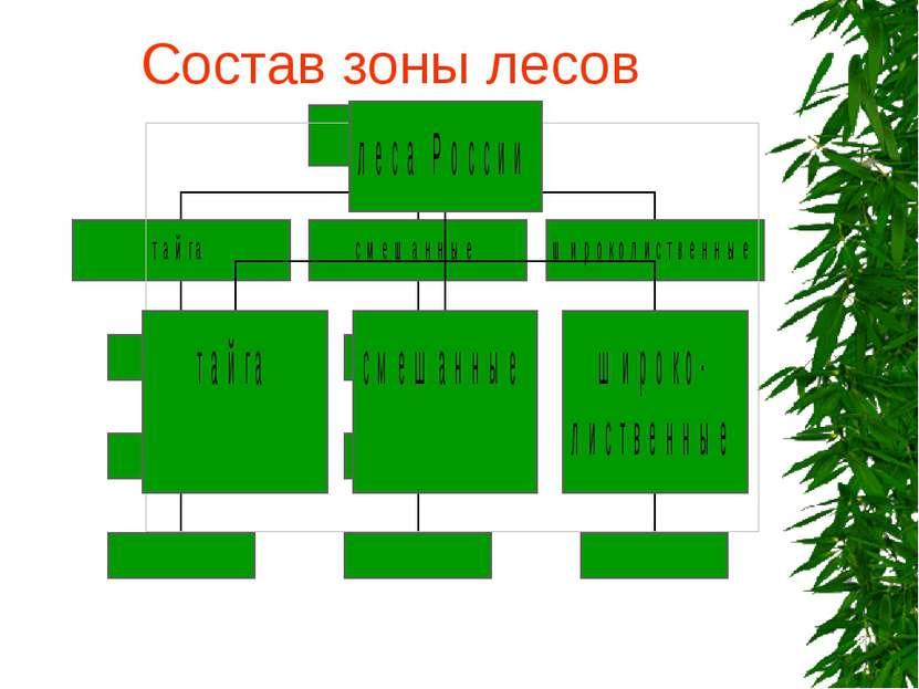 Состав зоны лесов