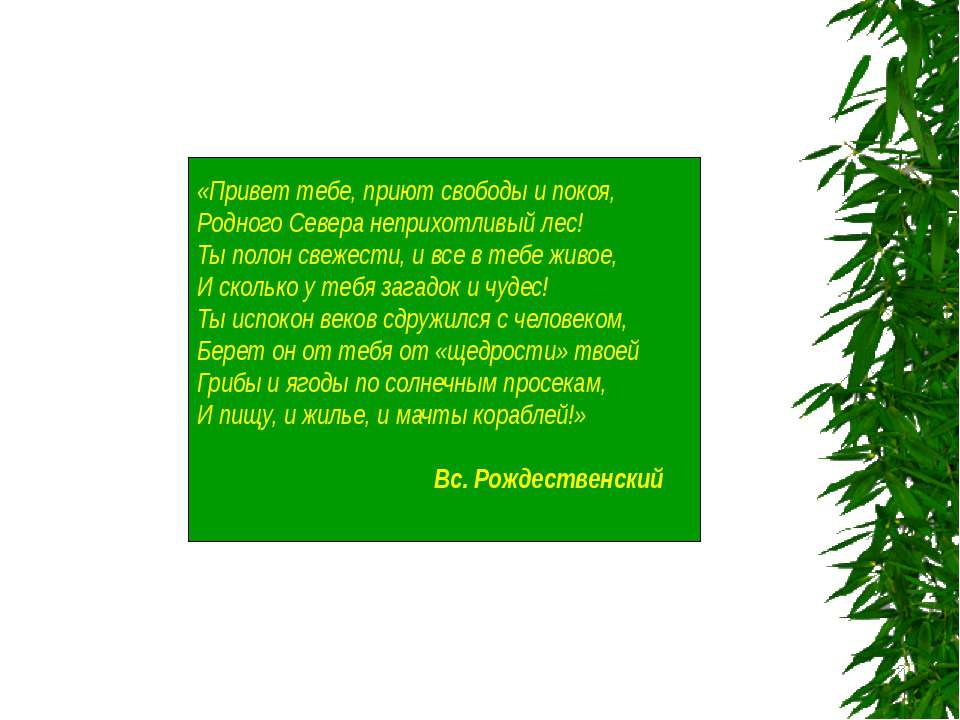 «Привет тебе, приют свободы и покоя, Родного Севера неприхотливый лес! Ты пол...