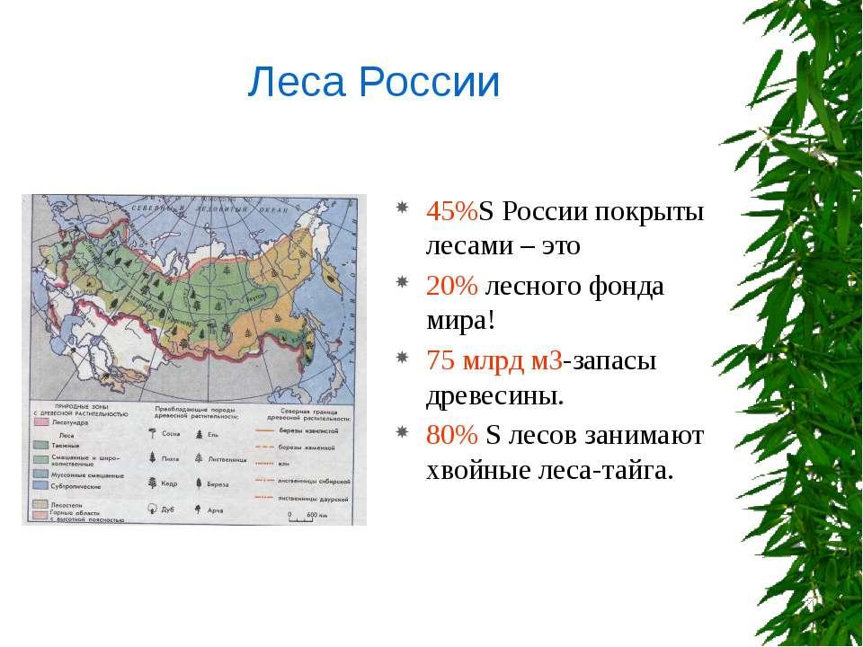 45%S России покрыты лесами – это 20% лесного фонда мира! 75 млрд м3-запасы др...